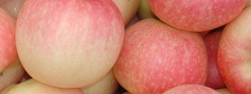 黄土高原嘎啦苹果5/10斤新鲜水果批发脆甜应季水果非冰糖心非红富
